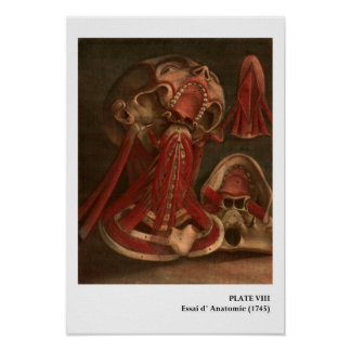 Vintage Anatomy | Neck and Face Poster