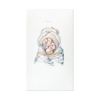 Vintage Anatomy of a Human Infant in Womb Canvas Print