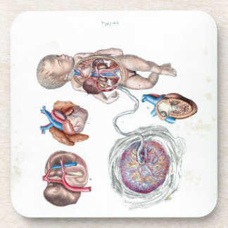 Vintage Anatomy of a Human Infant in Womb Coaster