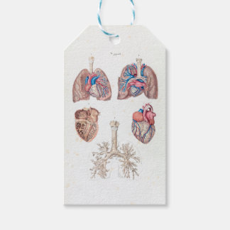 Vintage Anatomy of Human Heart and Lungs Gift Tags
