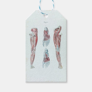Vintage Anatomy of Human Legs and Feet Gift Tags