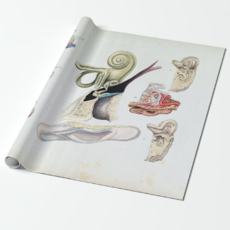 Vintage Anatomy of the Human Ear Wrapping Paper
