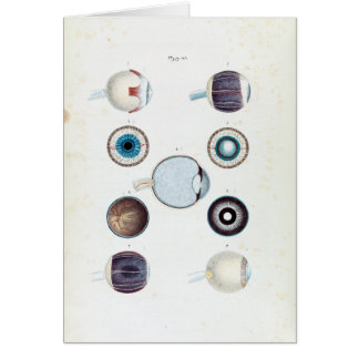 Vintage Anatomy of the Human Eye Card