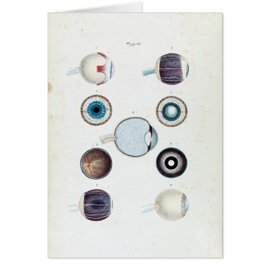 Vintage Anatomy of the Human Eye Card