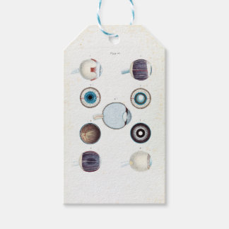 Vintage Anatomy of the Human Eye Gift Tags
