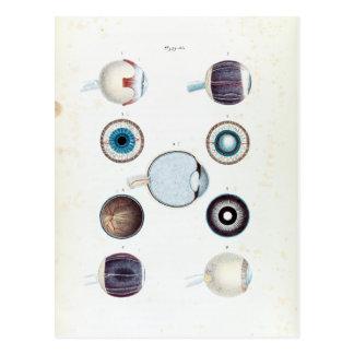 Vintage Anatomy of the Human Eye Postcard