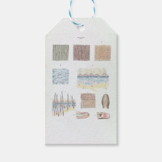 Vintage Anatomy of the Human Hair Skin and Nails Gift Tags