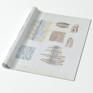 Vintage Anatomy of the Human Hair Skin and Nails Wrapping Paper