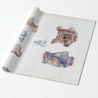 Vintage Anatomy of the Human Nose and Sinuses Wrapping Paper