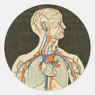 Vintage Anatomy Veins and Arteries Illustration Classic Round Sticker