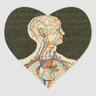 Vintage Anatomy Veins and Arteries Illustration Heart Sticker