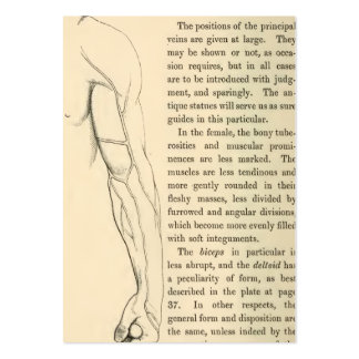 Vintage Anatomy | Veins of the Arm  (circa 1852) Large Business Card