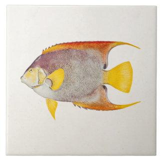 Vintage Angel Fish Antique Hawaiian Print Template Tile