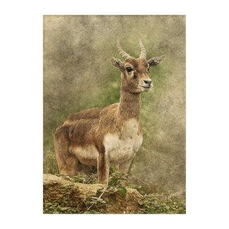 Vintage antelope standing acrylic wall art