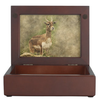 Vintage antelope standing keepsake box