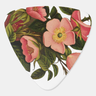 Vintage Antique Art Rose Flower Art Illustration Guitar Pick