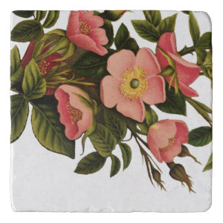 Vintage Antique Art Rose Flower Art Illustration Trivet