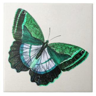 Vintage Antique Green Butterfly 1800s Illustration Tiles