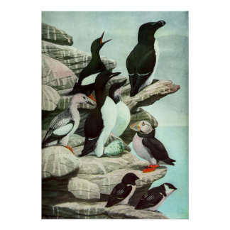 Vintage Aquatic Birds Puffins, Marine Life Animals Poster