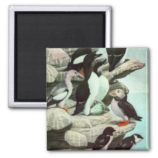 Vintage Aquatic Birds Puffins, Marine Life Animals Square Magnet