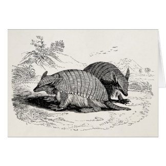 Vintage Armadillo Retro Armadillos Illustration Card