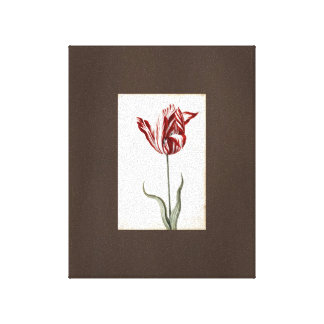 Vintage Art Drawing Botanical Red Tulip Canvas Stretched Canvas Print