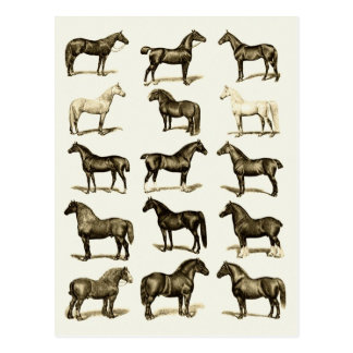 Vintage art Horse Breeds Chart printed postcards