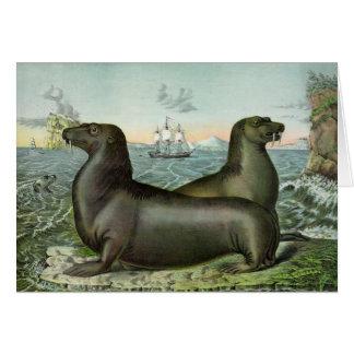 Vintage Artwork - Sea Lions on the Coast, Card