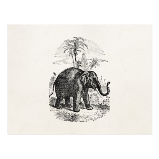 Vintage Asian Elephant Personalized Elephants Postcard