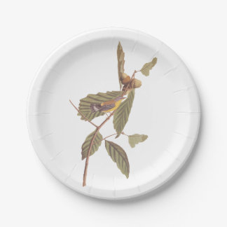 Vintage Audubon Magnolia Warbler Bird Paper Plate