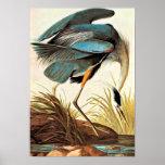Vintage Audubon Poster