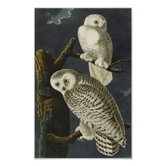 Vintage Audubon Snowy Owl Poster Print