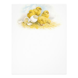 Vintage Baby Chickens Letterhead