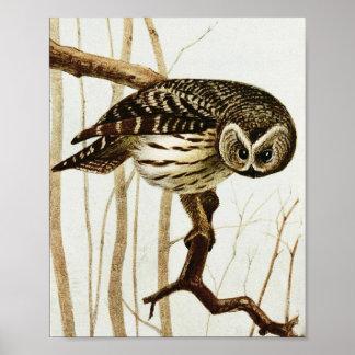 Vintage Bakked Owl Poster Print