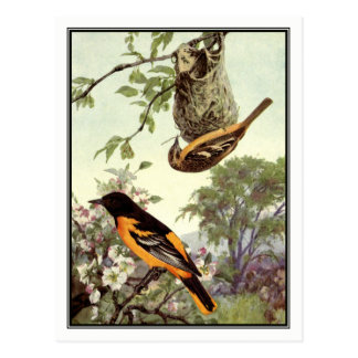 Vintage Baltimore Oriole by Robert Bruce Horsfall Postcard