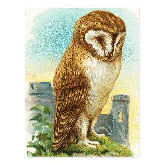 Vintage Barn Owl Postcard