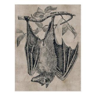 Vintage Bat Postcard