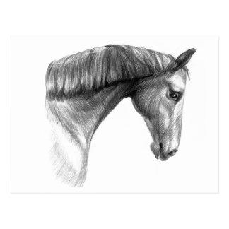 Vintage Beautiful Dark Horse Postcard