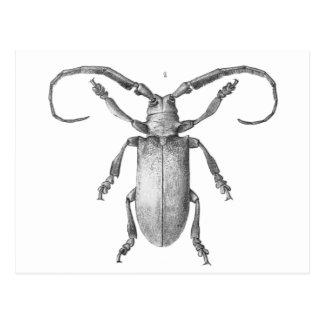 Vintage beetle illustration card