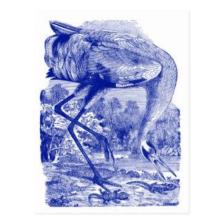 Vintage Bird Drawing   Blue   Whooping Crane Postcard