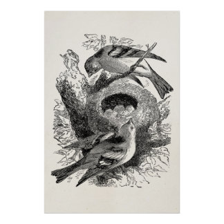 Vintage Bird Eggs Nest Illustration Template Poster