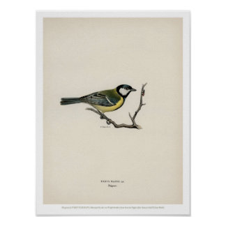 Vintage Bird Illustration - The Great Tit Poster