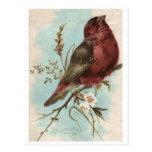 Vintage Bird Print Postcard
