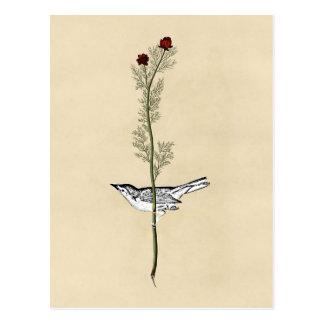 Vintage birdie postcard