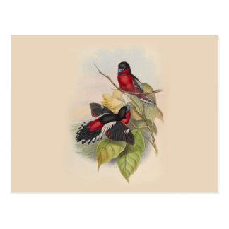 Vintage Birds 002 Postcard