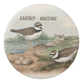 Vintage birds with eggs eraser