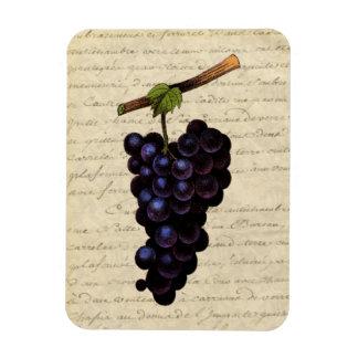 Vintage Black Grapes Magnet