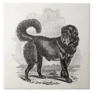Vintage Black Mastiff Dog 1800s Mastiffs Dogs Tile