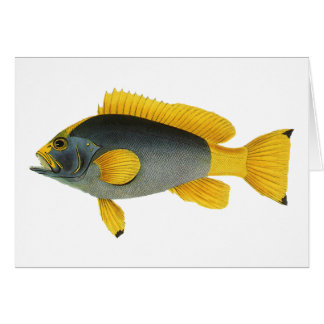 Vintage Blue and Yellow Grouper Fish, Marine Life Card