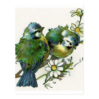 Vintage Blue Birds Postcard